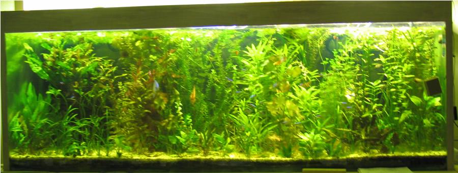 installer son premier aquarium d 39 eau douce. Black Bedroom Furniture Sets. Home Design Ideas